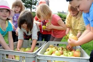 Bevor die Äpfel gepresst wurden packten die Kinder zum Waschen mit an.